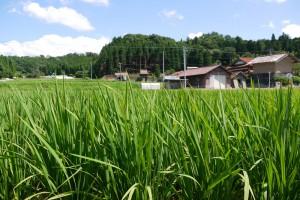島根県飯南町の夏