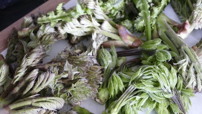 すべて飯南町内の野山で採取された山菜です。